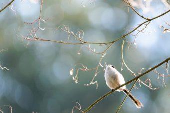 附属自然教育園の野鳥