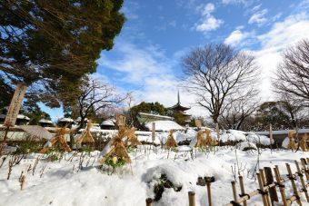 大雪と冬牡丹