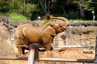 多摩動物公園と適材適所