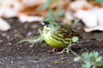 明治神宮で野鳥