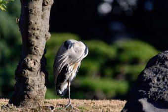 清澄庭園と公園で野鳥