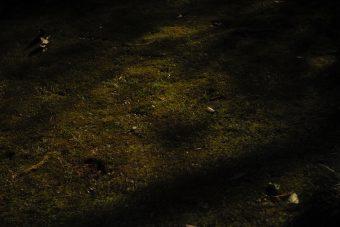 庭園トリオプラン