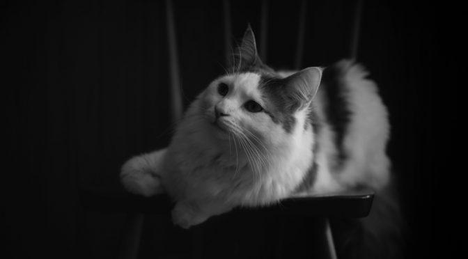 家で猫を撮ろう