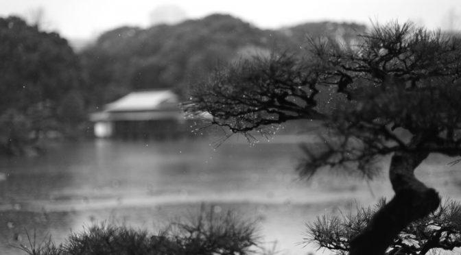 雨の清澄庭園