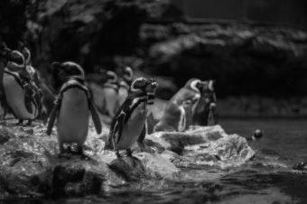 ペンギンの日