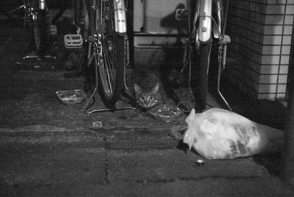 Cat lurking in the darkness.