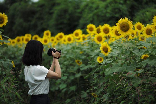 sunflower & wife