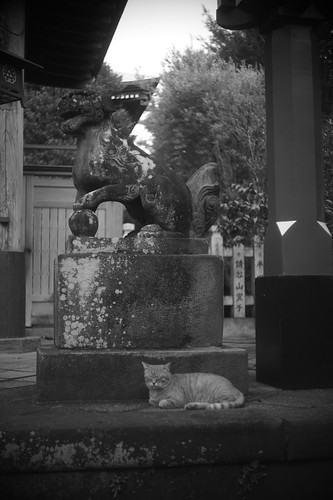 Guardian dog and cat