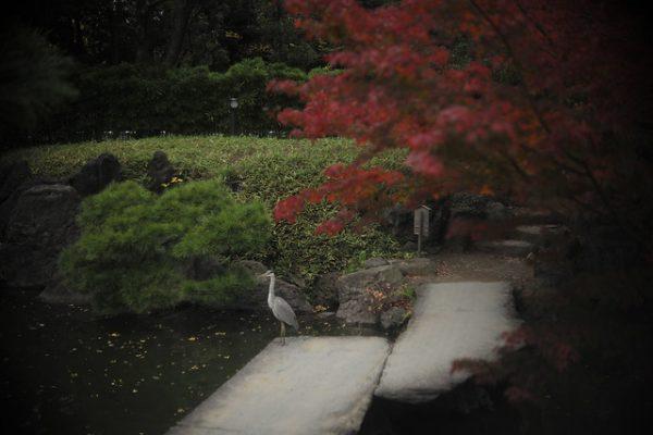 青鷺のいる庭