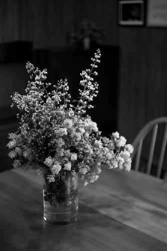 Flowers picked