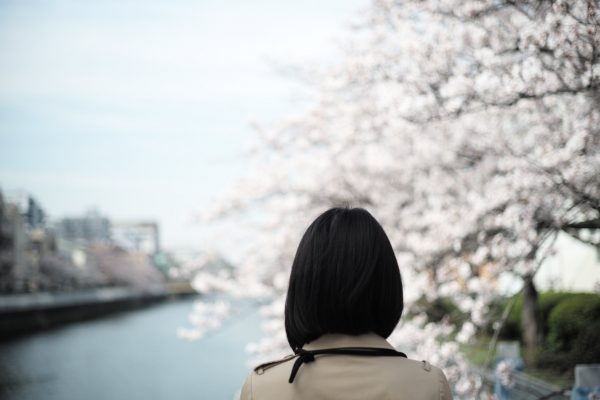 Cherry blossoms with my wife