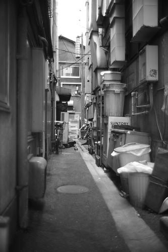 Cats behind the alley