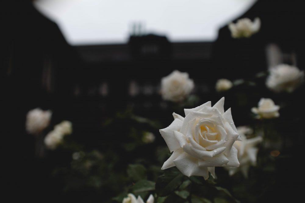 薔薇と銀座